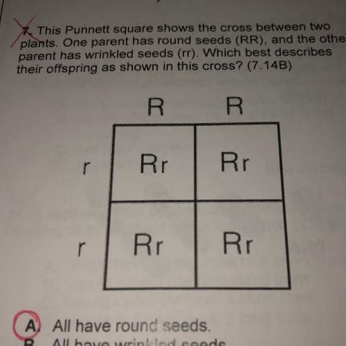This punnett square shows the cross between two pants. one parent has round seeds (rr). and the othe