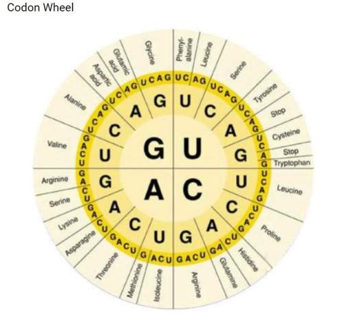 Using the mrna sequence you just created and the codon wheel above, what amino acid sequence will be