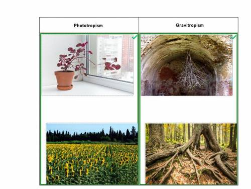 Identify the type of growth response that each plant demonstrates