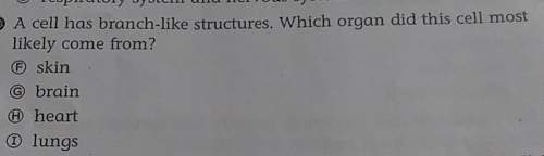 What organ does the branch like structures most likely come from? the choices a b c or d are in the